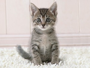 A cute little kitten . . . aaaawww